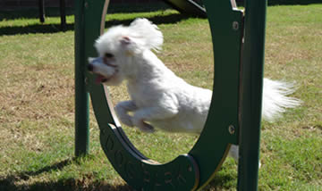 Dog Playground Hoop Jump